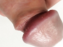 closeup cock